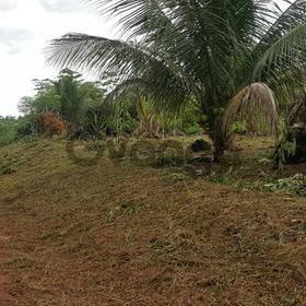 Brasilien Manaus  50 Ha Farmland / Wald
