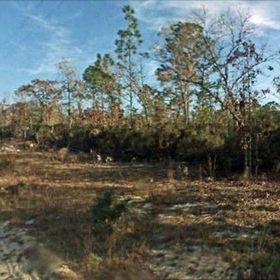Land for Sale 0.24 acre, 11341 Northeast 66 Street, Zip Code 32696