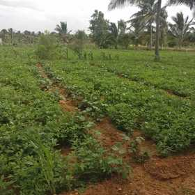 2.5 acre agricultural land for sale