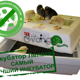 Incubators for birds or reptiles' eggs