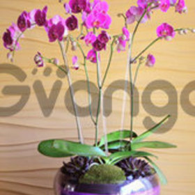 Brilliance in Pink - Orchid Arrangement