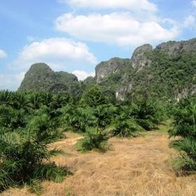 Land for Sale 29740 sq.m, Klong Yuan