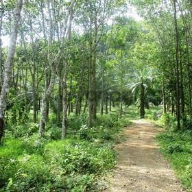 Land for Sale 11600 sq.m, Ao Nang
