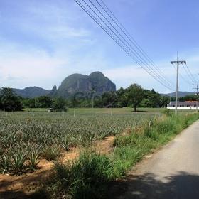 Land for Sale 1600 sq.m, Ao Nang