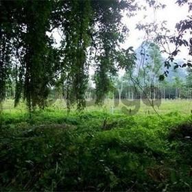 Land for Sale 11200 sq.m, Ding Daeng
