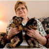 Look at this little joy! Such a cutie tcup yorkie pups