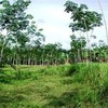 Land for Sale 6800 sq.m, Khao Klom