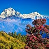Trip And Tour Nepal