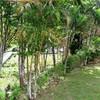 Land for Sale 800 sq.m, Ao Nam Mao