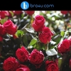 Doorstep Flower Delivery Services in Cox Town Bangalore