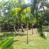 Beachfront Land for Sale at Tropical Island Nearby Krabi
