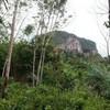 Rai Cliff View Land for Sale 12300 sq.m, Klong Muang Beach
