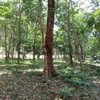 8320 sq.m Land Plot for Sale Midway Between Ao Nang and Krabi Town