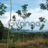 8 Rai Land with sea view for Sale between Ao Nang and Klong Muang