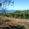 2272 sq.m Sea View Land for Sale , Klong Muang