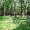 Land for Sale 43200 sq.m, Klong Muang