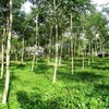 Land for Sale 3312 sq.m, Khao Tong