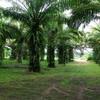 Land for Sale 6012 sq.m, Ao Nang