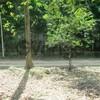 Land for Sale 4800 sq.m, Ao Nammao