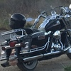 Impecable road king