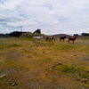 Vendo 289 has. s/ruta 1 en Cnel. Bogado - Itapua
