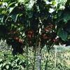 Finca agroindustrialen Venta Via lactea San Pedro de los Milagros