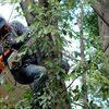 servicios de tala de arboles