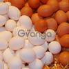 Vendemos huevos de gallinas al mayor