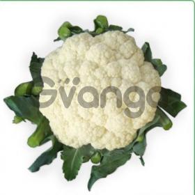 Семена цветной капусты VANZA F1 / ВАНЗА F1 фирмы Китано
