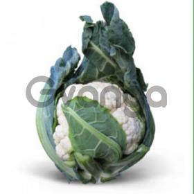 Семена цветной капусты Misora F1 / Мисора F1 (Китано)