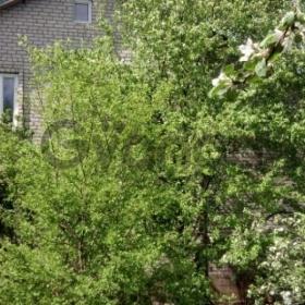 Сдается в аренду дом 5-ком 215 м² садовое товарищество Русское Поле