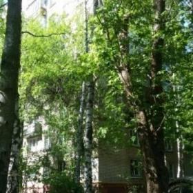 Сдается в аренду квартира 1-ком 32 м² Школьная,д.21