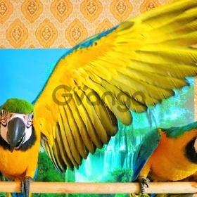 Сине желтый ара - ручные птенцы из питомников Европы