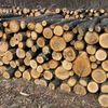 Продам дрова акация метровки