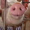 Резчик свиней