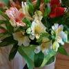 Цветы на День влюбленных - Доставка цветов Днепр