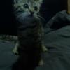 Спасенный котенок ищет семью