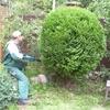 Услуги садовника, комплексное и разовое обслуживание сада.