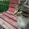 Молодого кота отдаём в хорошие руки