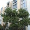 Продается квартира 3-ком 59 м² ул. Островского, 135