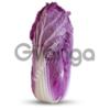 Семена пекинской капусты  KS 888 F1 (Китано)