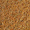 Кукуруза оптом от производителя.