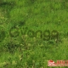 Продается Земельный участок под ИЖС 15 сот деревня Сумино,