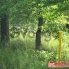 Продается Земельный участок под ИЖС 15 сот проезд Первомайский,