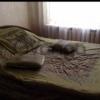 Сдается в аренду квартира 2-ком 45 м² Льва Толстого,д.40