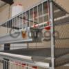 Производим клетки для домашней птицы