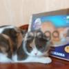 Когтедралки для кошек в Волгограде.
