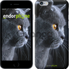 Чехол на iPhone 7 Красивый кот