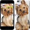 Чехол на iPhone 7 Йоркширский терьер с хвостиком