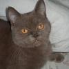 Лиловый котик